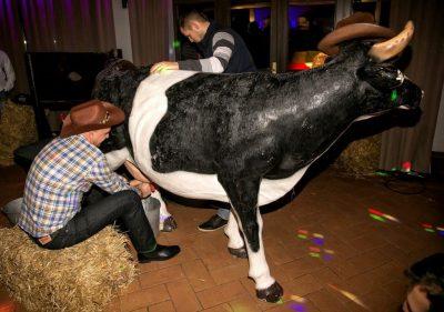 sztuczka krowa do dojenia
